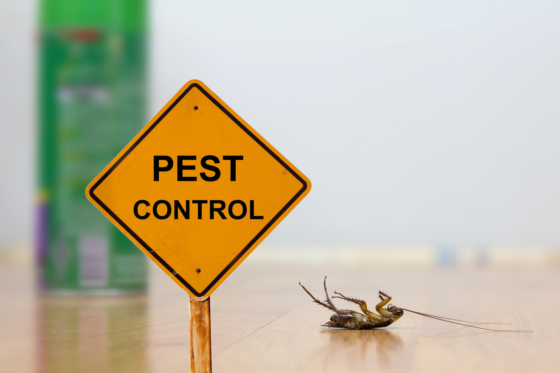 24 Hour Pest Control, Pest Control in Greenwich, SE10. Call Now 020 8166 9746