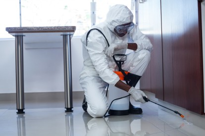Emergency Pest Control, Pest Control in Greenwich, SE10. Call Now 020 8166 9746